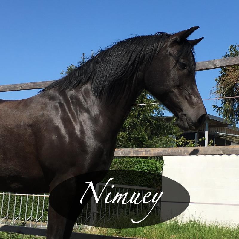Nimuey