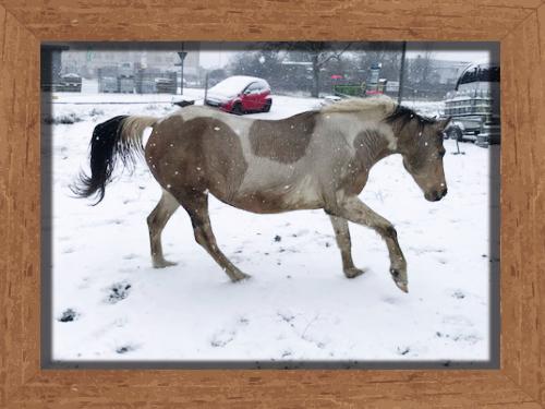 Bailey im Schnee Reitclub Asmares