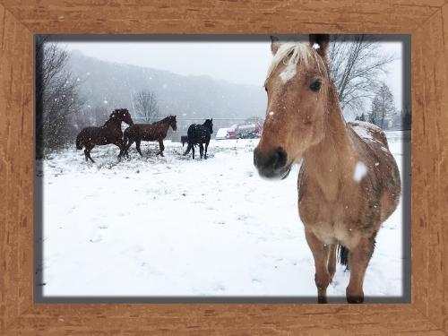 Sanny im Schnee Reitclub Asmares