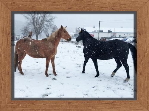 Sanny und Nimuey im Schnee Reitclub Asmares